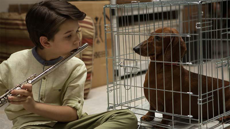 weiner-dog-sundance-movie